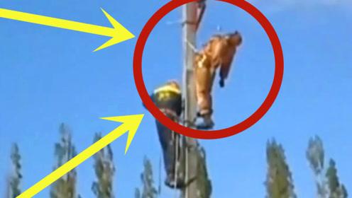 男子突遭高压线电击,当场休克昏迷,救援赶到一切已来不及!