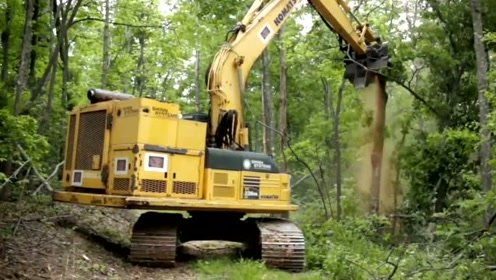 """无情的机器""""啃""""掉一棵树太简单"""