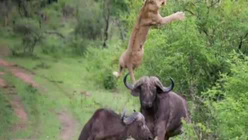 狮子说:这是我一生最丢脸的时刻,你们都必须没有看到!