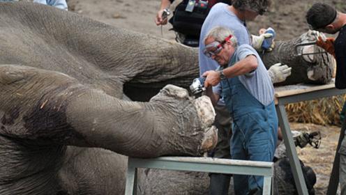 给大象修脚月收10万,为何却没人愿意做?看完你也会嫌弃