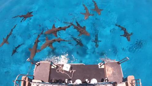 鲨鱼对血液特别敏感?小伙大胆测试,网友:和想象中完全不一样