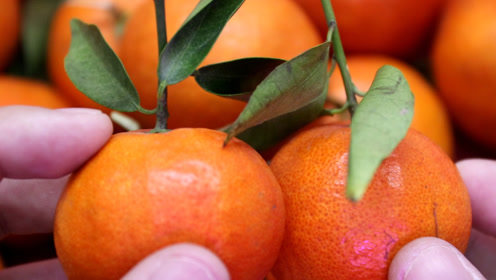 如何挑选好吃的橘子,教你一个小窍门,果农的方法太棒了