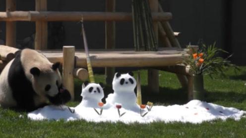 饲养员用雪堆成两只熊猫,国宝大熊猫看到后,反应笑翻了