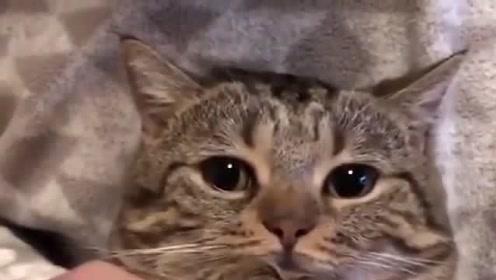 被迫营业的猫咪,猫:我只是一个没有感情的舞蹈机器
