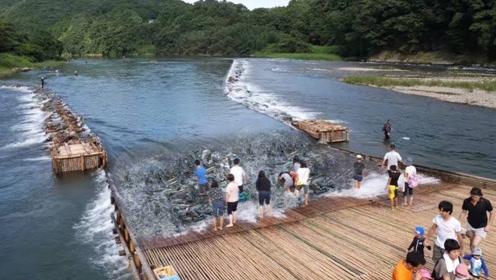 把竹排铺到河流上,汛期一到,大鱼随便捡
