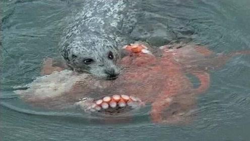"""男子看到一只落水的""""狗狗"""",正打算救援时,突然不对劲儿!"""