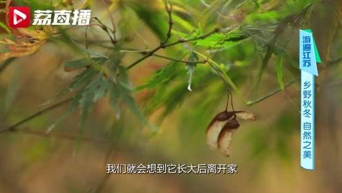 """游遍江苏丨赏了这么多年红叶,你可能没见过真的""""枫树"""""""