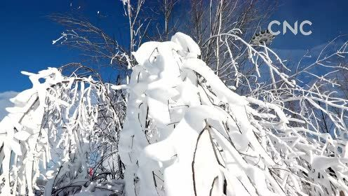 "AI合成主播 探访""中国北极""的圣诞老人"