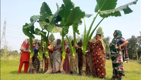 """印度的""""巨型""""蔬菜,个头比人还高,看看印度人怎么吃!"""