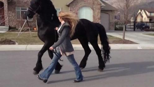 美女捡到一匹小马,结果越养越不对劲,专家看可不淡定了