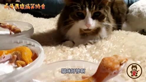 猫咪第一次看见3只蜥蜴,直接楞在原地了