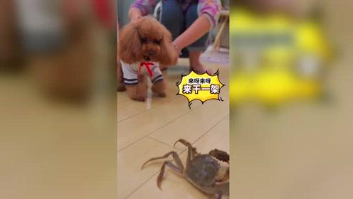 狗狗决战大闸蟹,非要它投降了才甘心!
