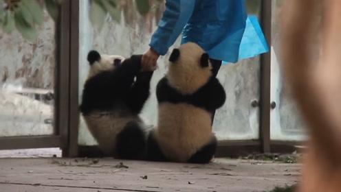 她可能是无数人的羡慕对象了,竟被数个熊猫宝宝抱大腿,太招仇恨了