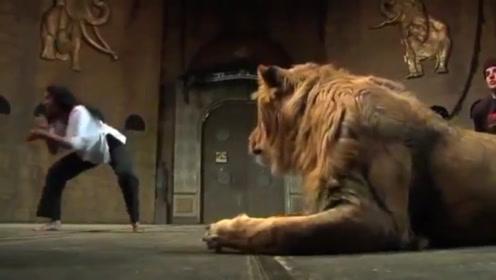雄狮正在休息,女子在一旁手舞足蹈,气得雄狮上去就是一个猛扑