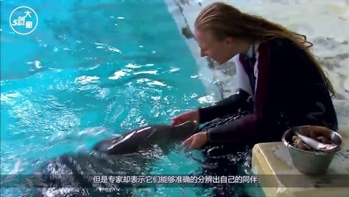 海豚为什么喜欢人类?在海豚眼中,原来人类是长这个样子!