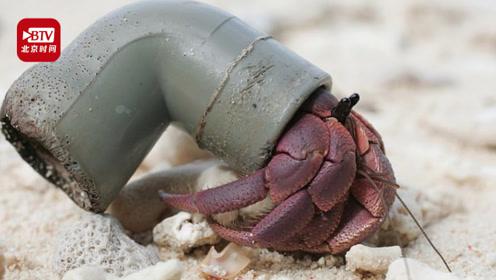 印度洋50万只寄居蟹被塑料垃圾困死 研究人员:将对生态产生重大影响
