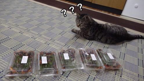 猫咪遇上螃蟹会做出怎样的反应?老外测试自家猫咪,画面有点好笑