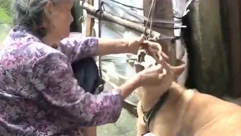 有一种饿叫你奶奶觉得你饿,不管死活硬往你嘴里塞,最后这个表情太形象了!
