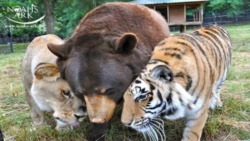 盘点4个动物之间的友情!谁说的王不见王?