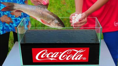 鲤鱼浸泡在可乐中,几分钟后竟成了一道美食?美女真是会玩!