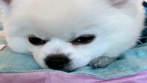 狗狗被姐姐抱怨又不开心了,看它的小表情真可爱,萌萌哒!