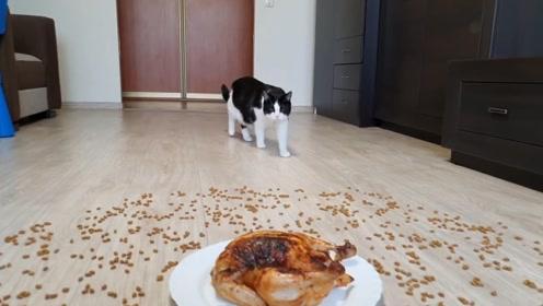 1000粒猫粮和一只烤鸡猫咪会做什么选择?猫:我全都要!