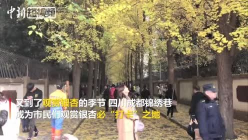 """成都""""银杏第一巷""""每天引数千市民""""打卡"""""""