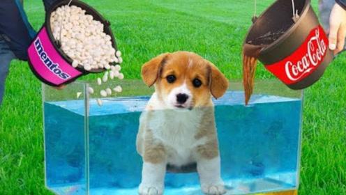 小狗放入10000个可乐曼妥思中,会发生什么?结果大开眼界!