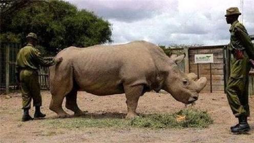 全球最珍贵动物,仅存一只,特种兵24小时持枪守护