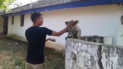 男子一耳光把猴子拍翻,猴子当场就懵了,网友:干得漂亮