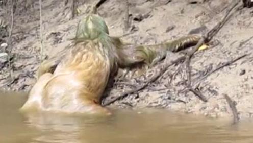 河边发现奇特动物,头上长绿毛行动有气无力,走进一看却哭笑不得
