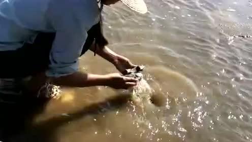 冬季赶海就是好,一找就找到了生蚝,还有很多