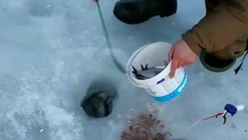今天又是收获的一天,用一个小渔网就捕到了这么多鱼,心里真高兴!