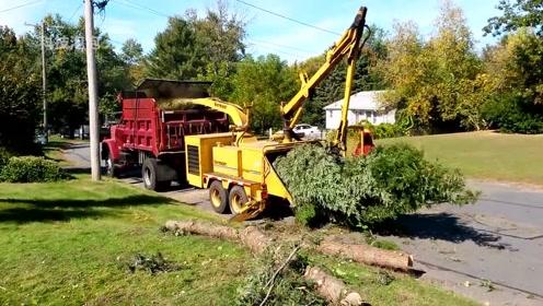 现代木材加工作业,大型树木粉碎机