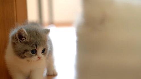 小奶狗第一次见到猫,开心冲过去,猫咪居然炸毛了,网友:奶凶奶凶的呀