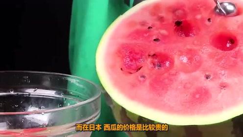 中国人吃西瓜,日本人吃西瓜,印度人吃西瓜,差距简直太大!