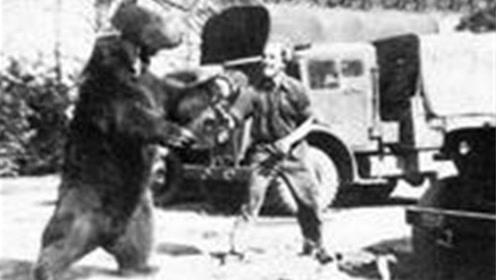 唯一参加过二战的熊,轻轻松松扛起几百斤炮弹,还有军衔和工资卡