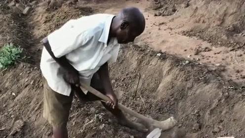 村里唯一一个有工作的老大爷,为了自己的几个孩子,下班后一刻不停歇的种地