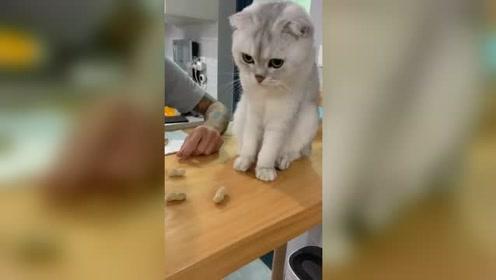 据说猫是一种手很欠的动物,眼前的一幕,真是不知道收敛的啊