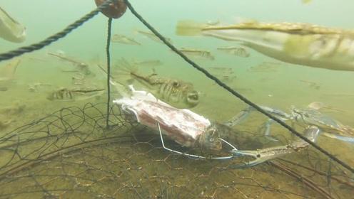 一块排骨放入海底,一群鱼和螃蟹都来了!