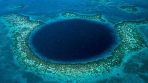 """中国科考船在马里亚纳海沟发现""""海底花园"""",被誉为""""生态天堂"""""""