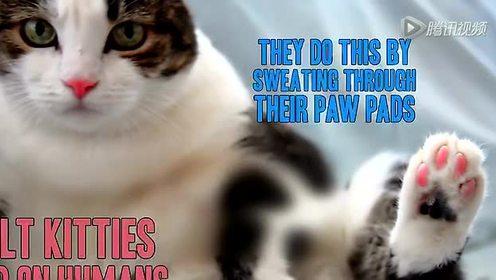 猫君来了  养猫不要忽略这七点