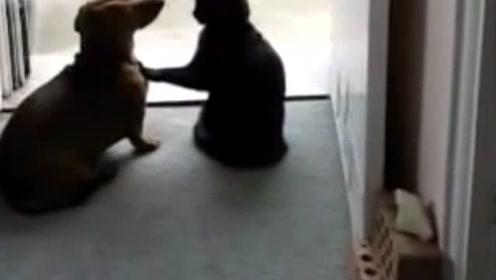 喵星人一个一指禅的点穴功就将聒噪的狗狗瞬间定住:闭嘴,蠢狗
