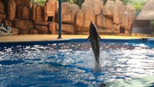 南宁动物园回应网传中华白海豚被迫表演:并非受虐而系旧伤