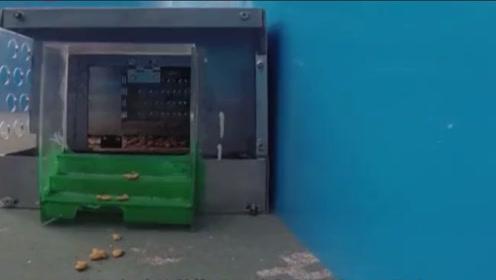 以后不用担心有老鼠了!农村小伙发明捕鼠神器,轻松捕光你家老鼠
