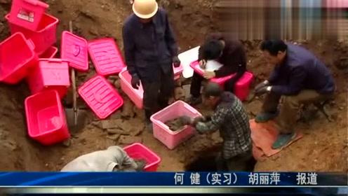 村民改造旧房 挖出4000多公斤古币