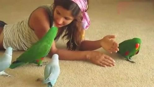 一只鹦鹉见女主人对其他鹦鹉好吃醋了,马上跑过来阻止,太搞笑了!