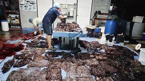 触目惊心!死亡鲸鱼肚里发现80多个塑料袋