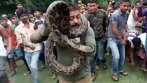 印度护林员生擒5.5米巨蟒 挂脖合影留念险被锁喉