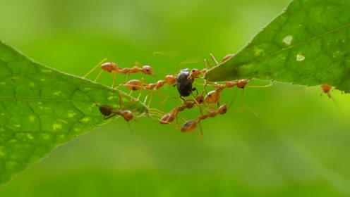 大自然的真相 - 蚂蚁的共生体系